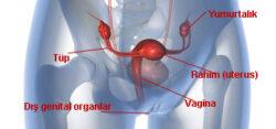 rahim kanseri, endometrium kanseri
